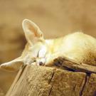 mi_kun's avatar