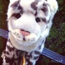 keepcalmandlovewebkinz's avatar