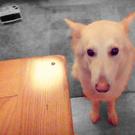 my_doggy_kira's avatar