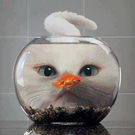 doggedsquash's avatar