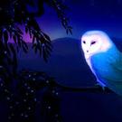 barnowlsrule's avatar
