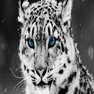 ebonystewart's avatar