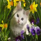 justinberginfruitandnutcom's avatar