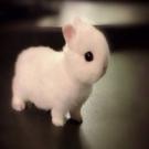 maayansoudry1's avatar