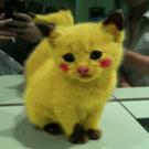 hiilikeu's avatar