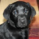 puppypowernat's avatar