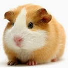 cocobean_4's avatar