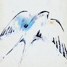 proelia's avatar