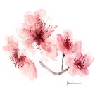 _ilse_'s avatar