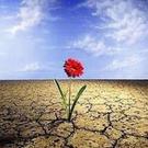 patriciaalmeidaalves's avatar