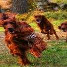 doglove's avatar