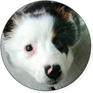 bobpierce's avatar