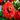 s1_d's avatar