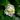 orliloveheart's avatar