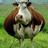 jim_bob123's avatar