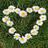 flower_power3's avatar