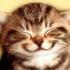 andreasdamgaard's avatar