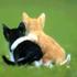 kittykatwonder avatar
