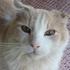 olmrsqueaks's avatar