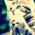 the_gingar_kitty_13625 avatar