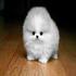 phoenixvu's avatar