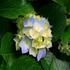 bluebell98345's avatar