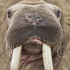 walrus4ever's avatar