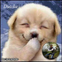paulmestach's avatar