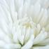 lydia_alex's avatar