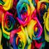 rosegirl101's avatar