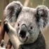 cindy516's avatar