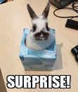 Poster:  SURPRISE!