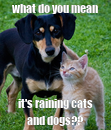 Poster: what do you mean it's raining cats and dogs??