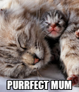 Poster:  PURRFECT MUM