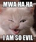 #cats .#evilkitty .#amelia890sposters .#amelia890 @amelia890