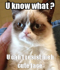 #grumpycat#memmes. Do u want more of these? Tell me meh little followers!