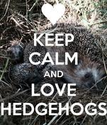 KEEP CALM AND LOVE HEDGEHOGS