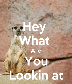 Poster: Hey  What  Are You Lookin at