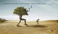 Poster: Если Вы недовольны тем местом, которое занимаете — смените его! Вы же не дерево!