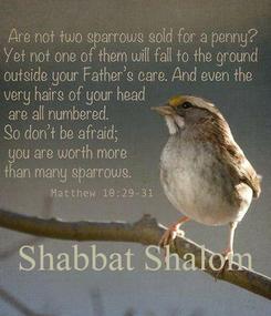 Poster:     Shabbat Shalom