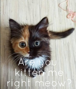 Poster:      Are you  kitten me  right meow?