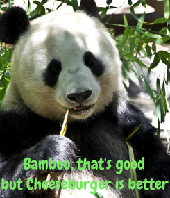Poster:    Bamboo, that's good but Cheeseburger is better