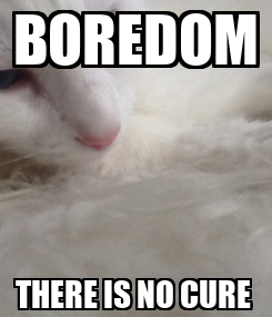 Poster: BOREDOM THERE IS NO CURE