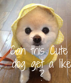 Poster: Can this Cute  dog get a like  ?