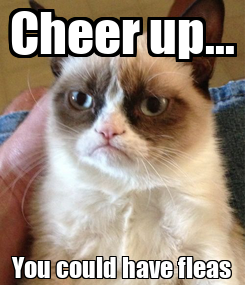 Poster: Cheer up... You could have fleas