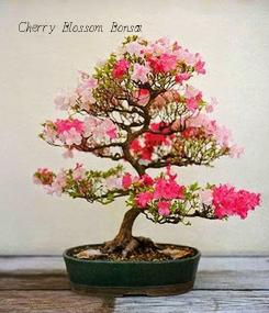 Poster: Cherry Blossom Bonsai