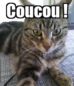 Poster: Coucou !