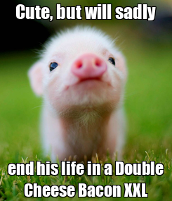 Poster:   Cute, but will sadly   end his life in a Double Cheese Bacon XXL