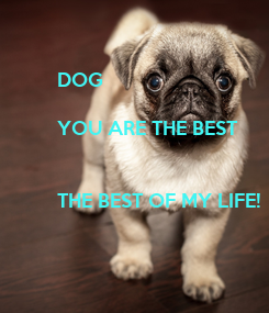 Poster: DOG  YOU ARE THE BEST   THE BEST OF MY LIFE!