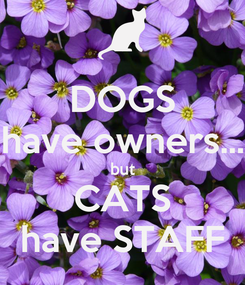 Poster: DOGS have owners... but CATS have STAFF